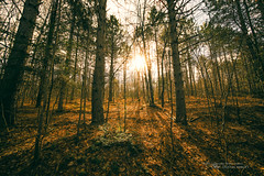 That Directional Light (Thousand Word Images by Dustin Abbott) Tags: autumn flare manualfocus woods shadows adobelightroomcc 2016 fall uwa pembroke dustinabbottnet trees laowa12mmf28zerod thousandwordimages photography petawawa fullframe forest canoneos5dmarkiv alienskinexposurex2 ontario canada canon5d4 hiking adobephotoshopcc photodujour dustinabbott