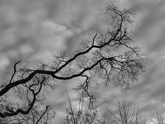 Winter (Elisa1880) Tags: den haag the hague meer en bos woods forest tree boom takken branches nederland netherlands
