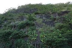 5D4_9205_DPP.Comp2048 (SF_HDV) Tags: canon5dmarkiv canon5dmark4 5dmarkiv 5dmark4 5dm4 haena haenabeachpark kauai hawaii