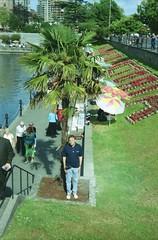 Palm in Victoria, BC (Stabbur's Master) Tags: canada palmtree victoriaharbor victoriabc bc