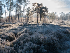 335-2016-366 Winter wonderland (graber.shirley) Tags: thursley