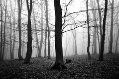 """shrouded in fog"" (Karel Hrouzek P H O T O) Tags: woods fog forest tree mist haze foggy frost freeze nature minimalism contrast mono blackandwhite czech mountains wild monochrome black white neutral sigma nikon leafs fall autumn winter inversion light misty road path"