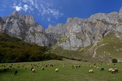 Mountains of Cantabria. Fuente De (joseluis.cueto) Tags: cantabria fuentede norte espaa spain naturaleza nature fantasticnature paisaje landscape paesaggio montaa mountains canon eos canon6d 6d 2470f4 filtropolarizador