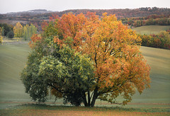 Transmutation (Etienne Regis) Tags: etienne photographe regis studiolecarre toulouse autumn yellow trees leaves field landscape red nature tree fall leaf orange life colors green france countryside land country campaign colorful trunk paysage natural world campagne