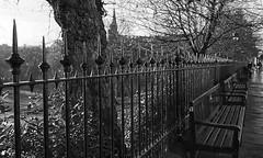 shiny happy fence after the rain  - HFF! (lunaryuna) Tags: scotland edinburgh capital urban city park urbanlandscape fence metalfence victorianfence fencefriday hff urbanconstructs walkinthecity blackwhite bw monochrome light lightmood lunaryuna