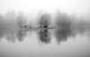 Reflets et brouillard (david49100) Tags: 2016 maineetloire arbres d5100 décembre nikon nikond5100 reflection reflets trees écouflant