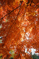 20161204-DS7_6548-2.jpg (d3_plus) Tags:  a05 wideangle d700 thesedays  architecturalstructure   kanagawapref   sky park autumnfoliage  japan   autumn superwideangle dailyphoto nikon tamronspaf1735mmf284dild  street daily  architectural  fall tamronspaf1735mmf284dildaspherical touring streetphoto  nikond700 tamronspaf1735mmf284 scenery building nature   tamron1735   tamronspaf1735mmf284dildasphericalif   autumnleaves