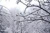 DSC02221_3 (aleksey1971) Tags: siberia altai belokurikha winter nature forest landscape tree snow сибирь алтай белокуриха зима природа пейзаж лес снег
