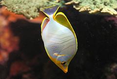 ocanopolis brest (55) (STEPHANE COSTARD PHOTOGRAPHIE) Tags: ocean sea fish water colors animal aquarium bretagne brest aquatic poisson parc finistre ocanopolis