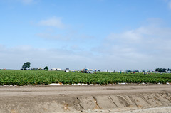 Migrant workers on a Salinas Berry Farm (m01229) Tags: california vacation unitedstates salinas d7000 august2014