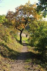 autumn at Moselle (Eifeelgood) Tags: autumn fall herbst eifel indiansummer mosel moselsteig eifeelgood