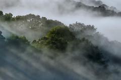 Drapé de brume