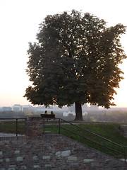 A tree (creepyweirdslove) Tags: tree cute love nature wall serbia belgrade beograd cuple srbija kalemegdan