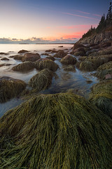 MaineCoast (Mike Mezeul II Photography) Tags: ocean park seaweed color water vertical sunrise rocks waves maine national shore acadia