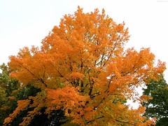 """Fiery Branches upward • <a style=""""font-size:0.8em;"""" href=""""http://www.flickr.com/photos/34843984@N07/15237025328/"""" target=""""_blank"""">View on Flickr</a>"""