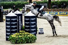 Jessica Krten riding Cool and Easy (yasminabelloargibay) Tags: horse caballo cheval grey mare cavalier cavallo cavalo pferd equestrian stallion equine csi hest paard showjumping hpica horserider gelding showjumper equestrianism equitacion hipismo jessicakrten