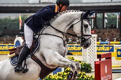 Nadja Peter-Steiner riding Capuera II (yasminabelloargibay) Tags: horse caballo cheval grey mare cavalier cavallo cavalo pferd equestrian stallion equine csi hest paard showjumping hípica horserider gelding showjumper equestrianism equitacion hipismo