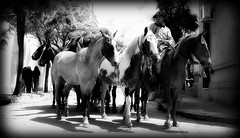 Calle abajo (Eduardo Amorim) Tags: horses horse southamerica argentina criollo caballo cheval caballos cavalos pferde herd cavalli cavallo cavalo gauchos pferd chevaux gaucho cavall  amricadosul gacho amriquedusud provinciadebuenosaires  gachos  sudamrica sanantoniodeareco suramrica amricadelsur areco sdamerika crioulo caballoscriollos criollos  tropillas americadelsud tropilhas tropilla crioulos cavalocrioulo americameridionale tropilha caballocriollo eduardoamorim cavaloscrioulos