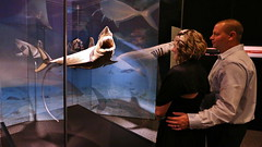 TFI Body Worlds- Animal Inside Out Members Premiere (8) (The Franklin Institute Science Museum) Tags: bodyworlds franklininstitute plastination animalinsideoutexhibit