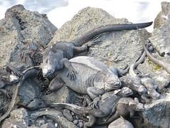 Galápagos - Isabela-44