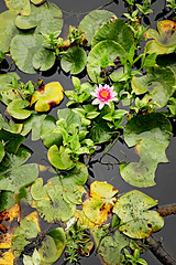Stanley Park (Valerie Manne) Tags: park canada flower nature vertical vancouver pond lilly