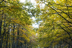 scarabocchi d'autunno... (imagina (www.giuseppemoscato.com)) Tags: italy foglie alberi italia tuscany toscana sentiero autunno colori rami bosco monteamiata