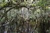 OCHOPEE, USA - Big Cypress preserve/ ОЧОПИ, США - заповедник Биг-Сайпресс (Miami Love 1) Tags: forest collier moss florida selva bosque jungle swamp spanishmoss everglades naples cypress fl preserve bigcypress cienega floridian лес baldcypress заповедник болото джунгли кипарис мхи флоридский эверглейдз сайпресс нейплз испанскиймох коллиер