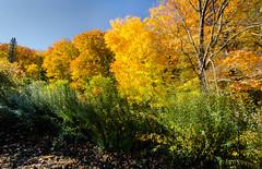 _14L8481 (5816OL) Tags: dad fallcolors arboretum arboretum2014