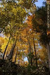 Autumn Trees 2 (Jamie Hedworth) Tags: trees ontario canada fall nature leaves fallcolors wilderness milton fallcolours rattlesnakepoint haltonhills jamiehedworthphotography