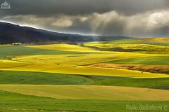 paesaggio di campagna, country landscape (paolo.gislimberti) Tags: southafrica fields agriculture campi sudafrica agricoltura coltivazioni countrylandscapes cultivations paesaggidicampaga
