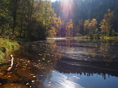 Waldsee (Paramedix) Tags: autumn lake fall nature germany landscape deutschland see herbst natur olympus landschaft schwarzwald blackforest badenwürttemberg baiersbronn em5 mitteltal