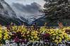 Saying goodbye to Summer . (Josiane . On&Off) Tags: flowers summer mountain canada nature landscape nationalpark nikon banff lakelouise victoriaglacier
