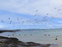 Galápagos - Isabela-99