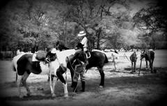 Charla 'e campo (Eduardo Amorim) Tags: horses horse woman southamerica argentina criollo caballo cheval caballos donna mujer femme mulher cavalos pferde cavalli cavallo gauchos pferd pampa besos chevaux gaucho  amricadosul gaucha gacho amriquedusud provinciadebuenosaires  gachos  sudamrica sanantoniodeareco gauchas suramrica amricadelsur areco sdamerika crioulo caballoscriollos criollos  pampaargentina americadelsud crioulos cavalocrioulo americameridionale caballocriollo campeiros campeiro eduardoamorim cavaloscrioulos pampaargentino
