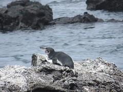Galápagos - Isabela-143