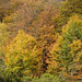 Bosques Asturias: Parque de Redes