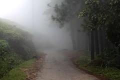 Misty path (Manu praba) Tags: mist path greens riverston