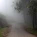 Misty path