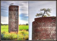 The Tenacity of Trees (zendt66) Tags: trees sky tree brick oklahoma field clouds photo nikon gate horizon silo pasture dewey weekly challenge hdr bartlesville d90 photomatix zendt66 52weeks2014