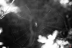 En la red (David A.R.) Tags: david canon eos ar vigo fotografo padron araujo pontecesures grupal valga 40d kdd´s