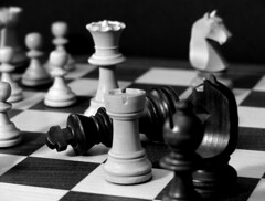 schach springer