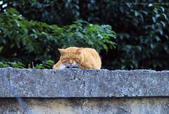 L1007531 (LaBonVampire) Tags: leica animals zeiss cat carlzeiss zm planar50 leicam8 planart250