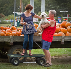 pumpkins (Eric.Ray) Tags: halloween beautiful digital canon project square point photo shoot pumpkins 365 g12