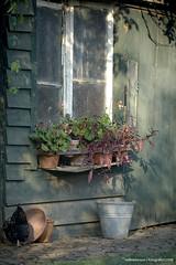Houten . . . (willem_huwae) Tags: canon maastricht tuin blik planten hout hok 9554 heerenhof potten i 20071118 willemhuwae