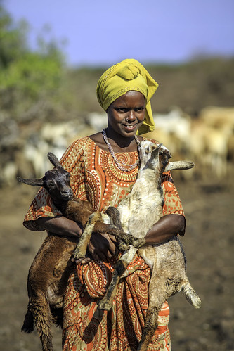 Momina ali, 10, moves livestock to a new location in Afar region of Ethiopia