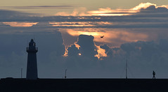 the man who fixes lighthouses (ifido) Tags: lighthouse sunrise seagull sunup donaghadee