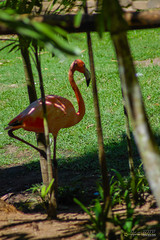 Martinique - Zoo du Carbet (Ben.2BR) Tags: zoo martinique carbet fwi lecarbet 201410mebt