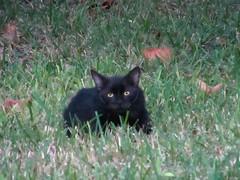 Wild Cat (M.P.N.texan) Tags: wild cat homeless stray feral imasucker