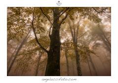 Atmosfera Autunnale (Simone Angelucci) Tags: parco fog nebbia autunno simbruini faggeta livata