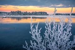 november afternoon (SeALighT!) Tags: sweden sverige schweden lapland lappland arjeplog lake branches snow ice sunset landscape trees orange